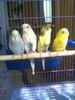 alinka***parrots