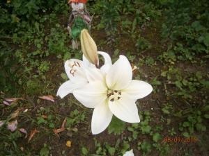 blog-15209-1474406464_thumb.jpg