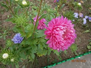 blog-15209-1474406526_thumb.jpg