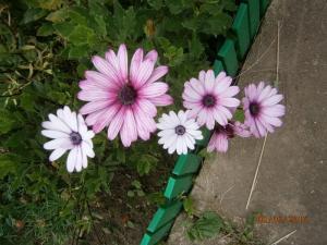 blog-15209-1474406603_thumb.jpg
