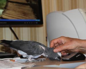 blog-21234-1287844197_thumb.jpg