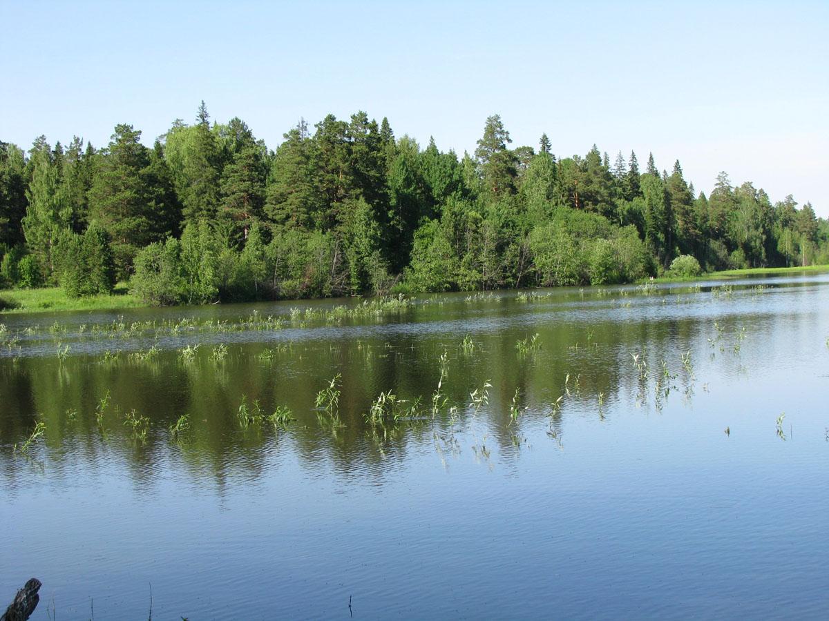 Брянская область озеро святое рыбалка