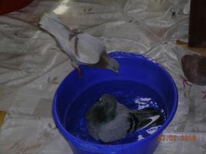 blog-59706-1471842001_thumb.jpg