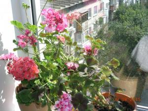blog-59706-1477978980_thumb.jpg