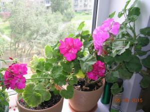 blog-59706-1477978989_thumb.jpg