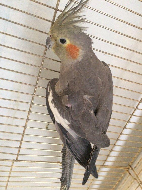 Птица 1.jpg