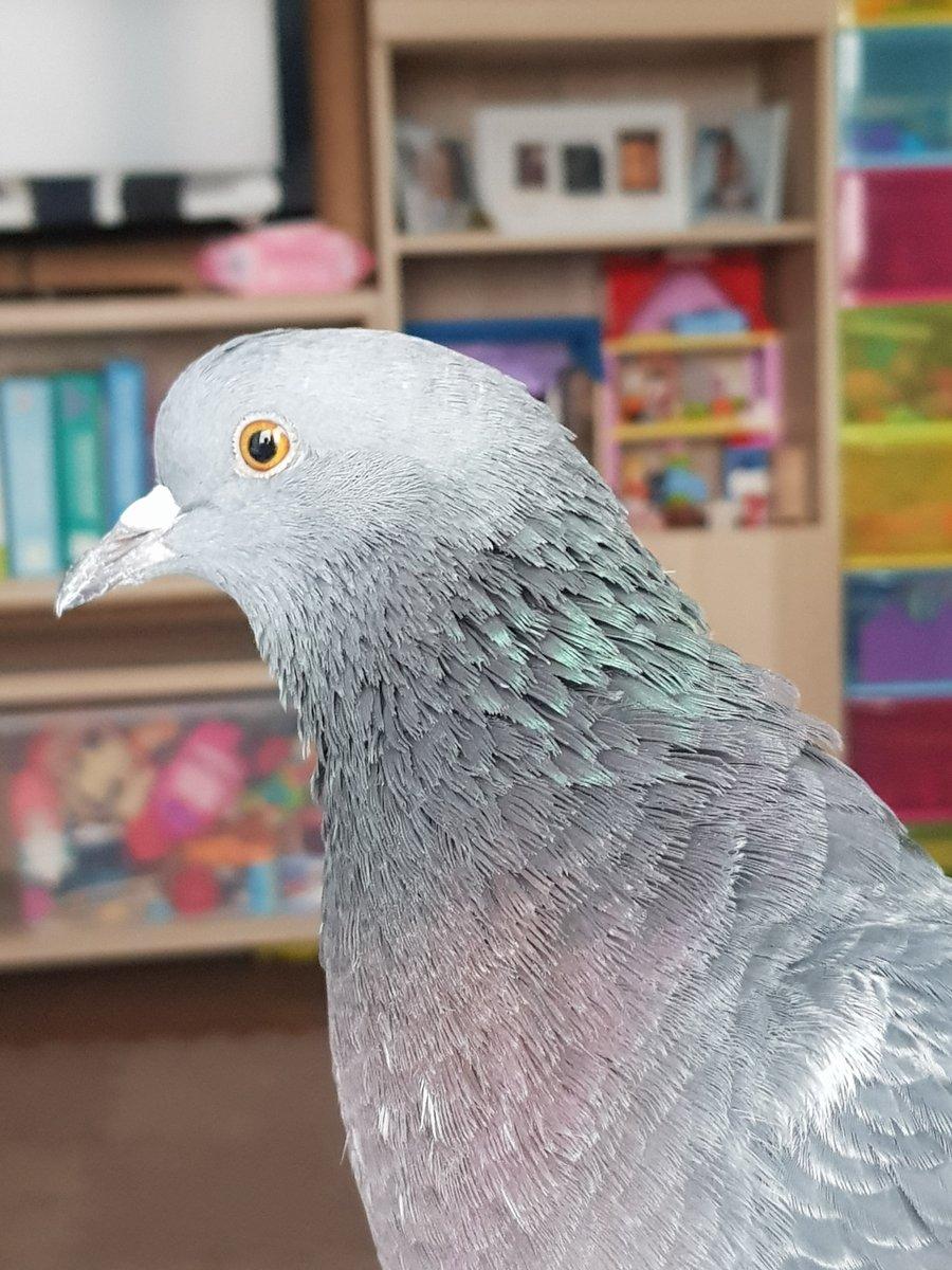 Порнуха машина голуби, мои набухшие сиськи частное фото