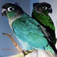 Coco&Blue