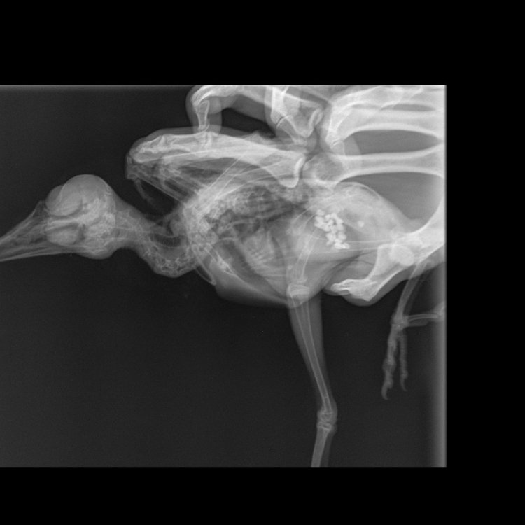 птица 2.jpg