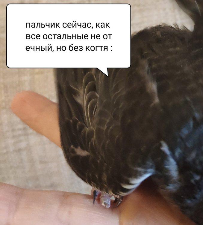 IMG_20190915_185319.jpg