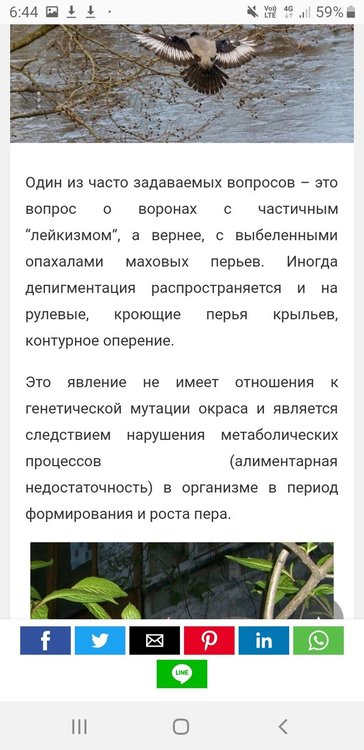 Screenshot_20200628-064453_Samsung Internet.jpg