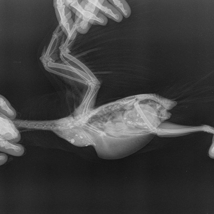 Мелкие животные_Рептилии-Позвоночник VD-22.10.2020-21_11_32-174.JPEG