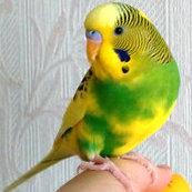 NZ_Birds