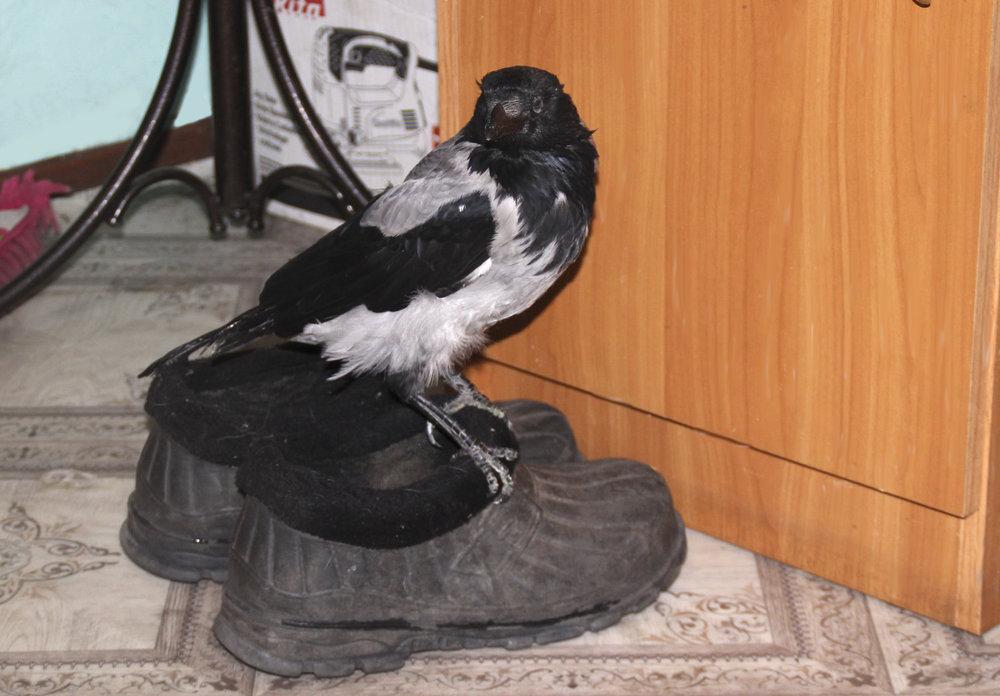 Карыч с обувью.jpg