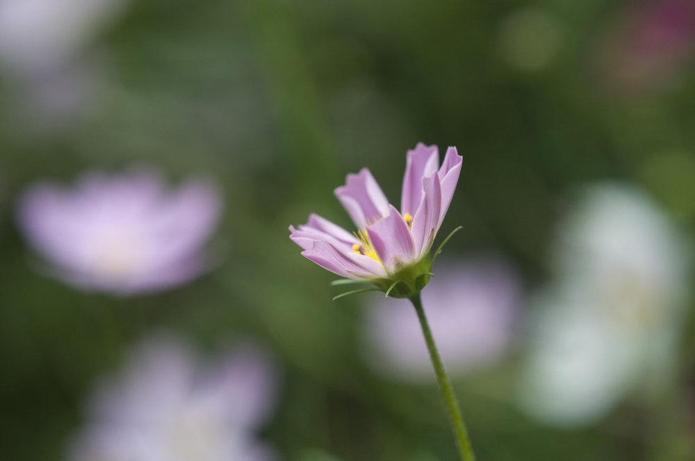 цветы_5_пон3.jpg