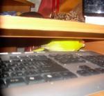 post-16032-1234091216_thumb.jpg