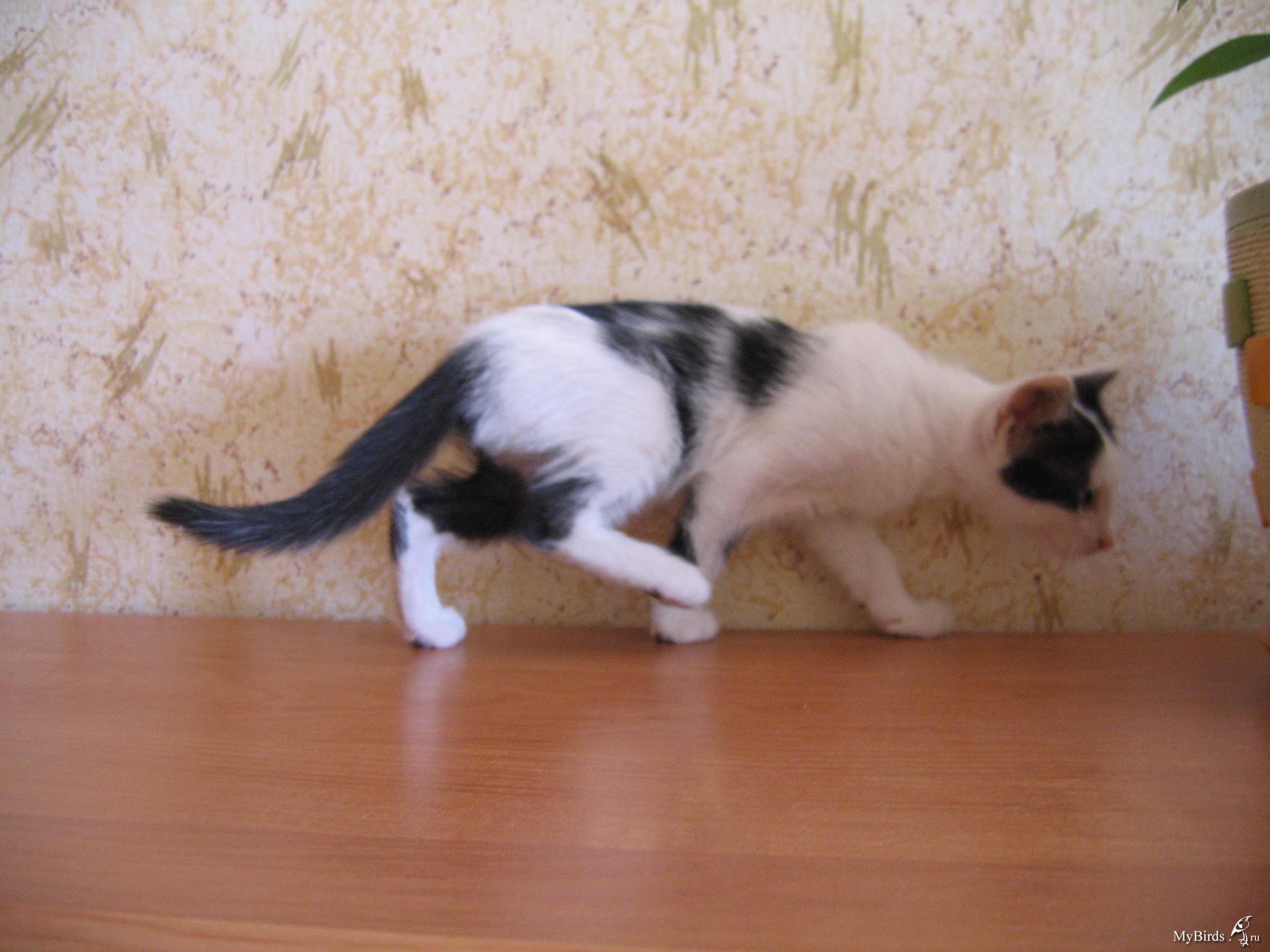 Роды у кошки: признаки начала и процесс родов 8