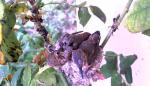 kolibri_3.jpg