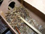 Гнездо1.jpg