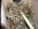 Гнездо2.jpg