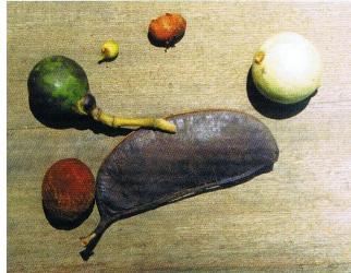 Плод масличной пальмы фото