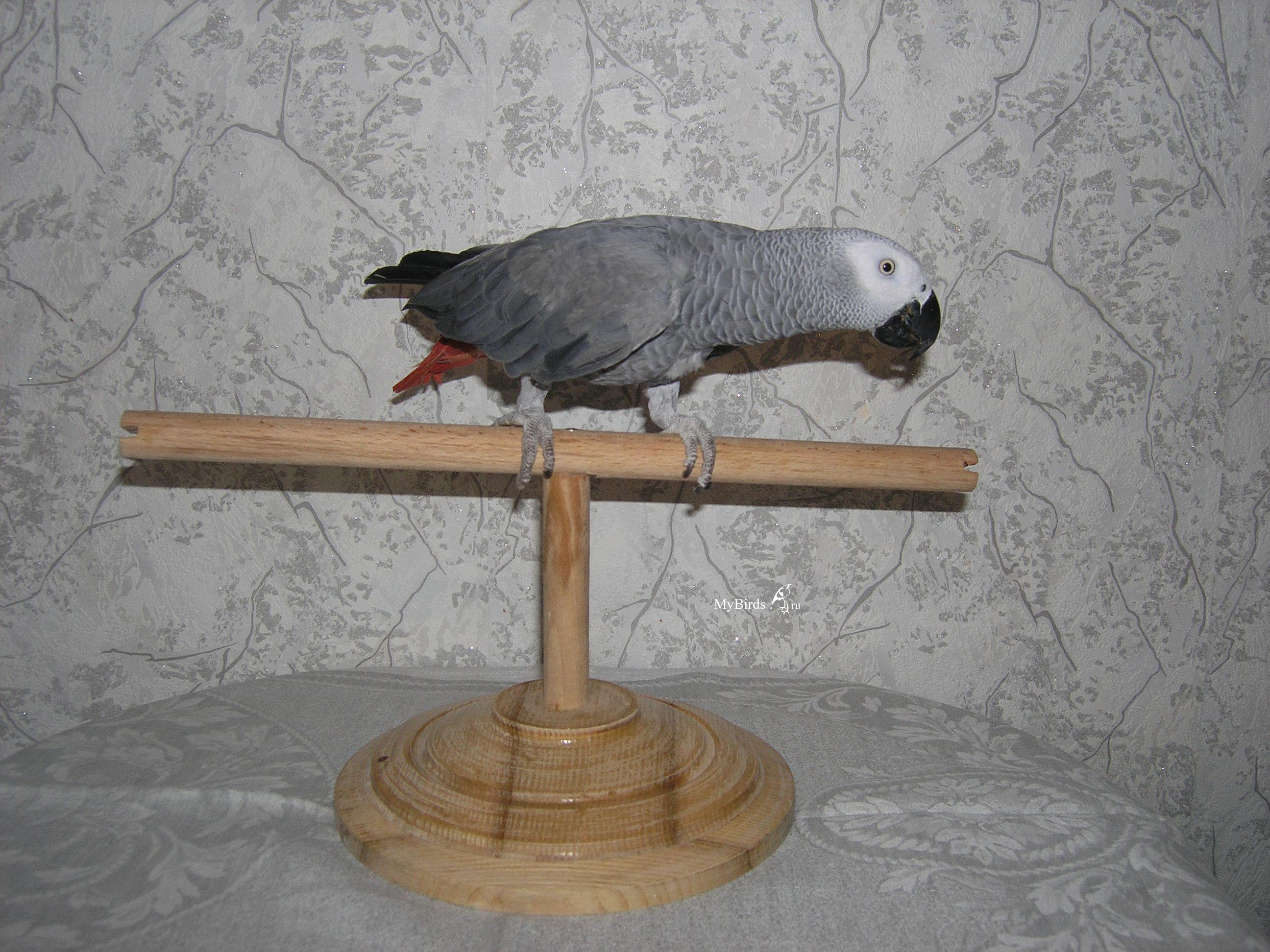 Что можно сделать волнистому попугаю своими руками фото 844