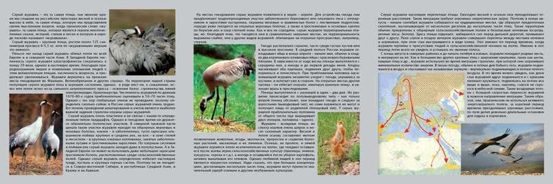 MyBirds  Энциклопедия владельца птицы