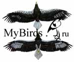 Четвертый годовой наряд белоплечего орлана