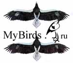 Шестой и седьмой годовый наряды белоплечего орлана