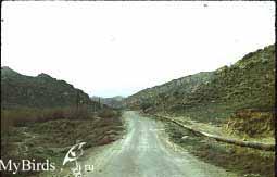Дорога от хребта Караелчи к поселку Пархай