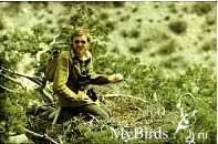 Букреев С.А., сотрудник Сюнт-Хасардагского заповедника в гнезде черного грифа