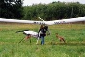 Итальянский дельтапланерист Анжело Д Ариго, быстро обрел контакт с птенцами.