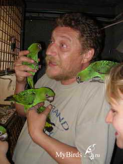 Жуков Николай Викторович, владелец питомника, со своими питомцами, птенцами конголезский попугаев